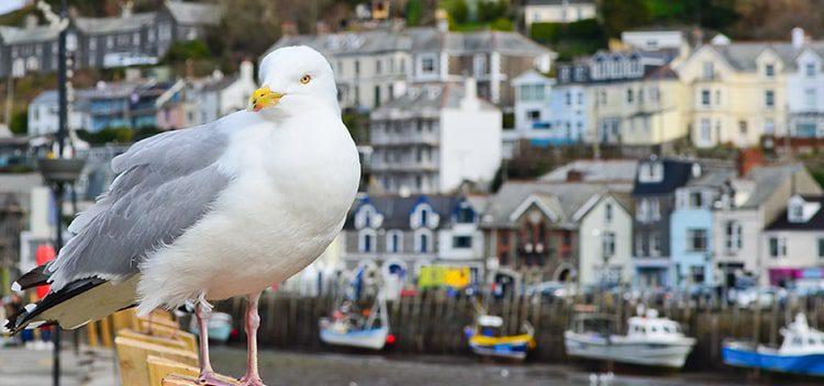 Top 3 UK Seaside Breaks for the Elderly